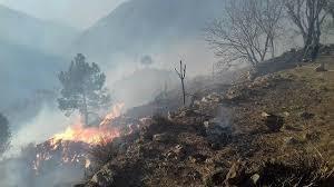 Wild fire burns over 100,000 trees in KPK